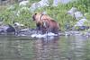 Brown_Bears_Alaska_2014_0037