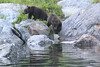 Brown_Bears_Alaska_2014_0165
