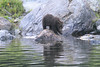 Brown_Bears_Alaska_2014_0171