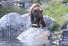 Brown_Bears_Alaska_2014_0049