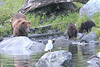 Brown_Bears_Alaska_2014_0055