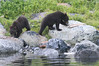 Brown_Bears_Alaska_2014_0187
