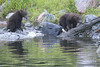 Brown_Bears_Alaska_2014_0178
