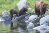 Brown_Bears_Alaska_2014_0179