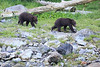 Brown_Bears_Alaska_2014_0004