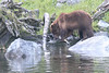 Brown_Bears_Alaska_2014_0058