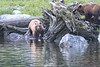 Brown_Bears_Alaska_2014_0019