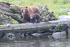 Brown_Bears_Alaska_2014_0068