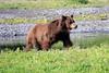 Pack_Creek_Bear_Canon_2018_Alaska_0010