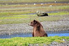 Pack_Creek_Bear_Canon_2018_Alaska_0011