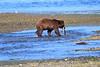 FishingBear_Canon_2018_Alaska_0034
