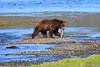 FishingBear_Canon_2018_Alaska_0044