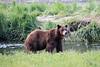 Pack_Creek_Bear_Canon_2018_Alaska_0003