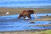 FishingBear_Canon_2018_Alaska_0038