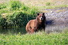 Pack_Creek_Bear_Canon_2018_Alaska_0009