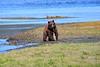 FishingBear_Canon_2018_Alaska_0065