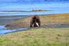 FishingBear_Canon_2018_Alaska_0062