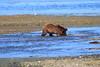 FishingBear_Canon_2018_Alaska_0028