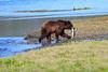 FishingBear_Canon_2018_Alaska_0045
