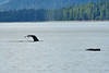 Humpback_Tail_Sony_2018_Alaska_0207