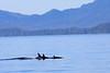Orca_Canon_2018_Alaska_0066