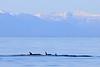 Orca_Canon_2018_Alaska_0063