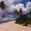 WAK palms