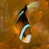 Palau 0672