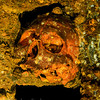 skull fused to interior wall in Yamagiri Maru engineroom.