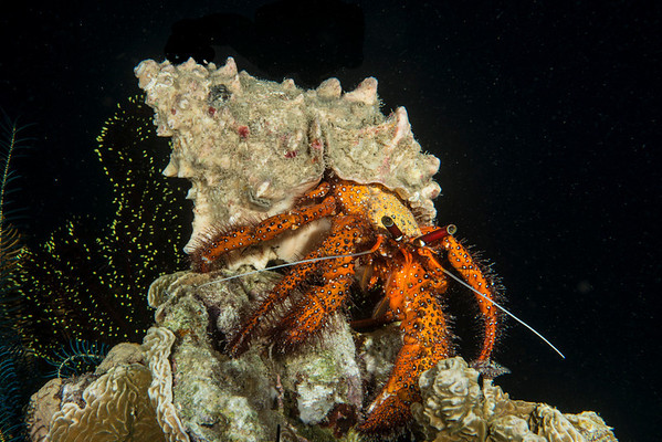hermit crab at Sogod Bay pier