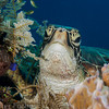 turtle closeup, Sogod Bay