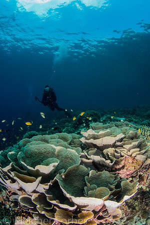 cabbage coral and diver ( John) under the clouds.