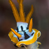 nudibranch. 105 lens and +10 diopter