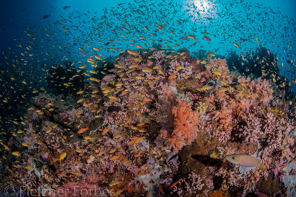 Sogod Bay wall diving - sooo good!