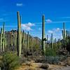 Arizona - Sonora Desert Museum