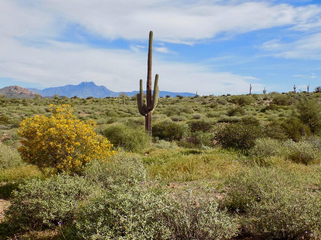 Apache Junction, AZ