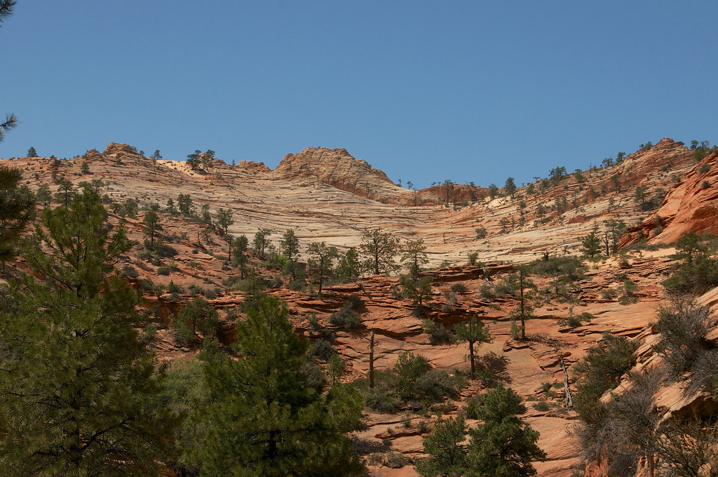 Scattered trees on the hill, Zion, NP