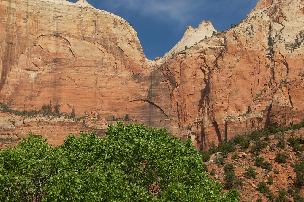 Tree before the mountain, Zion, NP