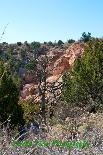 Tree against the red rock