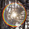 Sun breaks through the branches