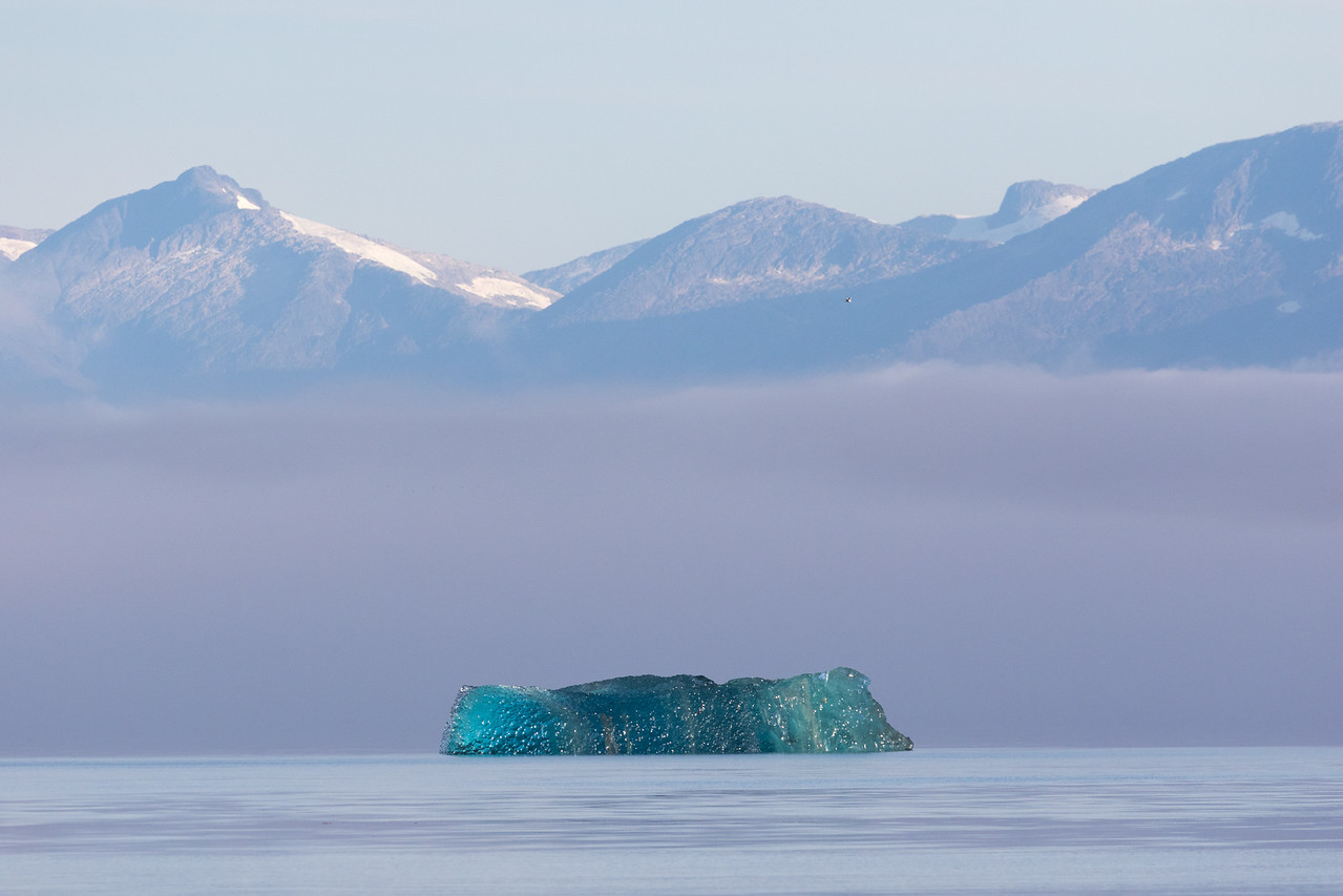 An amazing blue iceberg in early morning light in Endicott Arm