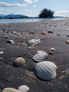 But in other areas the sea shells are abundant when the tide is out