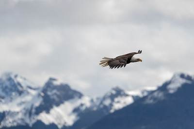 Nonetheless they soar magnificently over the mountains