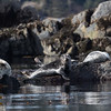 Harbor seals are also easily found around Sitka