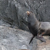 I hope you enjoyed this tour of my new home.  California sea lions didn't come this far North until recently.