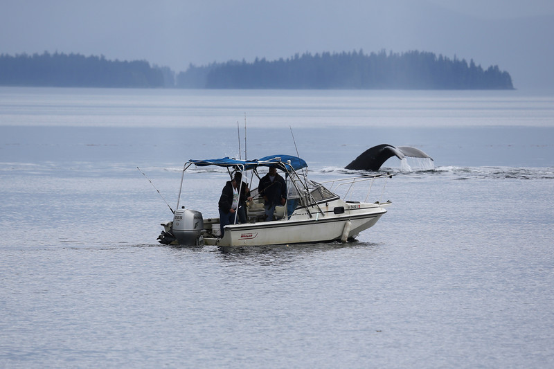 Two fisherman seemed oblivious to the whale activity going on near their small boat.