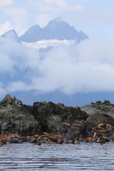 Steller sea lion colony on Yasha Island