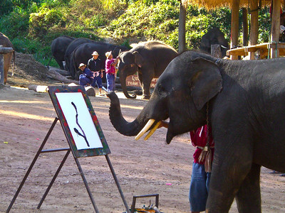 Elephants earning their keep