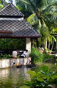Restaurant workers feeding the black swans in the pond outside our villa