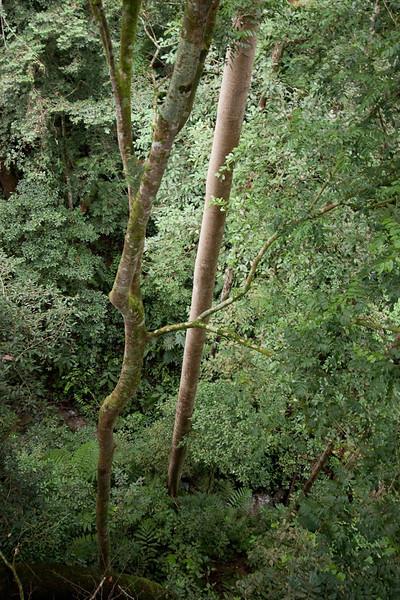 beautiful trees everywhere
